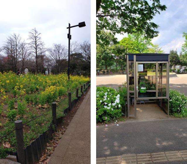井草森公園-管理事務所正面-花畑-公衆電話