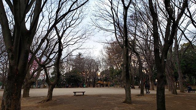 井草森公園-多目的広場-流れエリアからの眺め